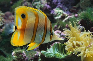 Tropical fish image