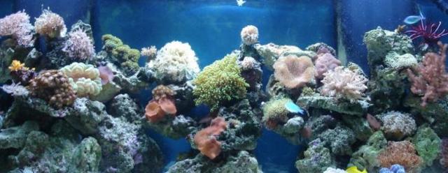 Aquarium image (masthead)