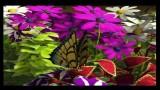 My Garden (3DS) Screenshot