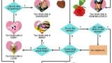 Nintendojo Flowchart: Your Nintendo Boy Dream Date