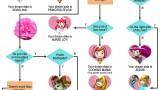 Nintendojo Flowchart: Your Nintendo Girl Dream Date